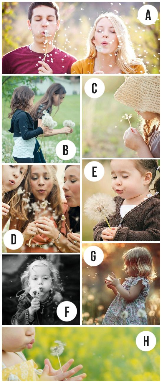 Dandelion Spring Photography