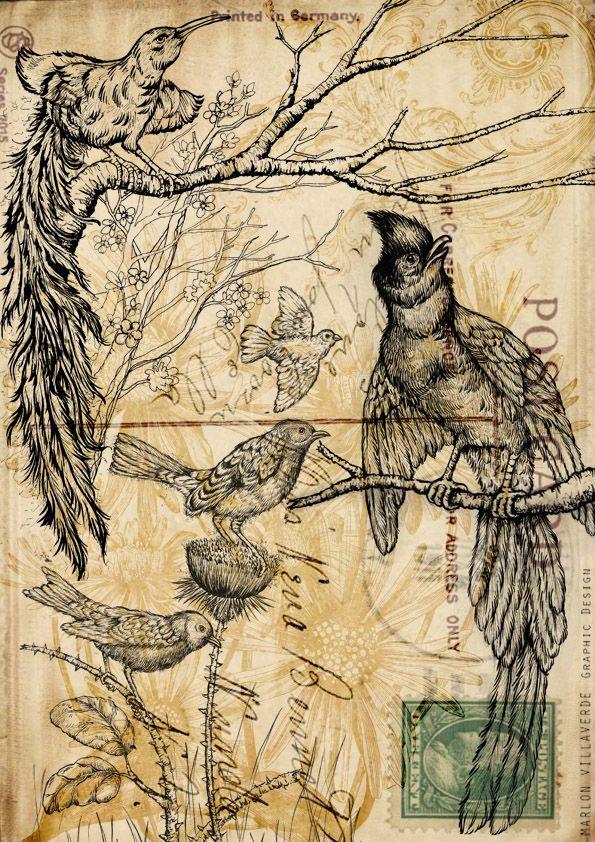 Vintage Birds by Marlon Villaverde, via Behance (postcard art)