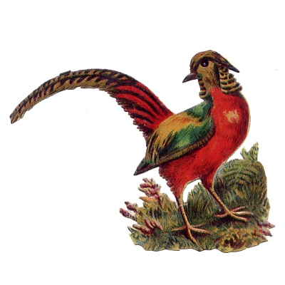 Victorian Scrap Bird: