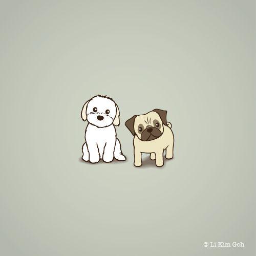 Shih Tzu Maltese Mix and Pug
