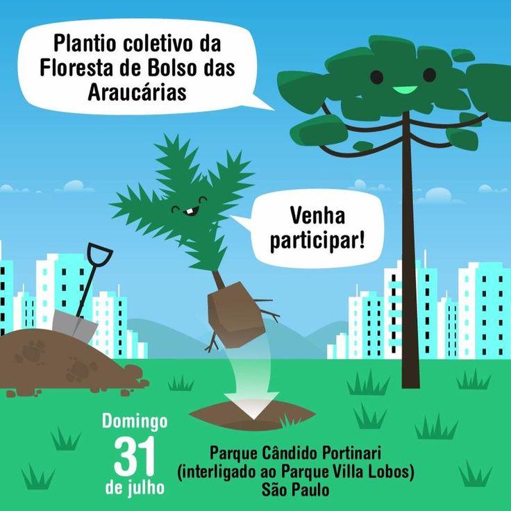 Em mutirão voluntário iremos plantar nesse domingo, 31, às 10 horas no Parque Villa Lobos / Cândido Portinari cerca de 600 mudas nativas de 90 espécies diferentes.