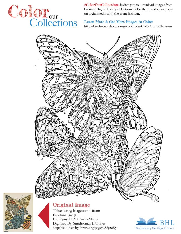 """#ColorOurCollections. Original Image: http://biodiversitylibrary.org/page/48852987. To download this image, right click on the pin and choose """"save image as"""" to save the image to your computer. You can then print and color at your leisure!"""