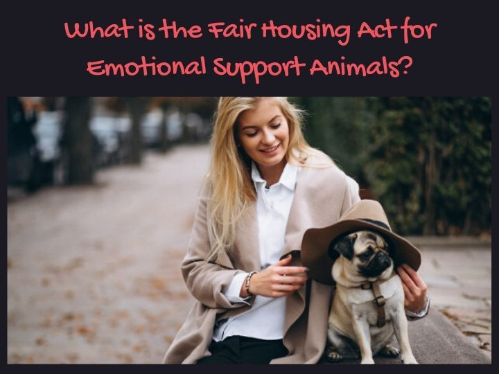 What Is The Fair Housing Act For Emotional Support Animals Emotional Support Animal Emotional Support Emotions