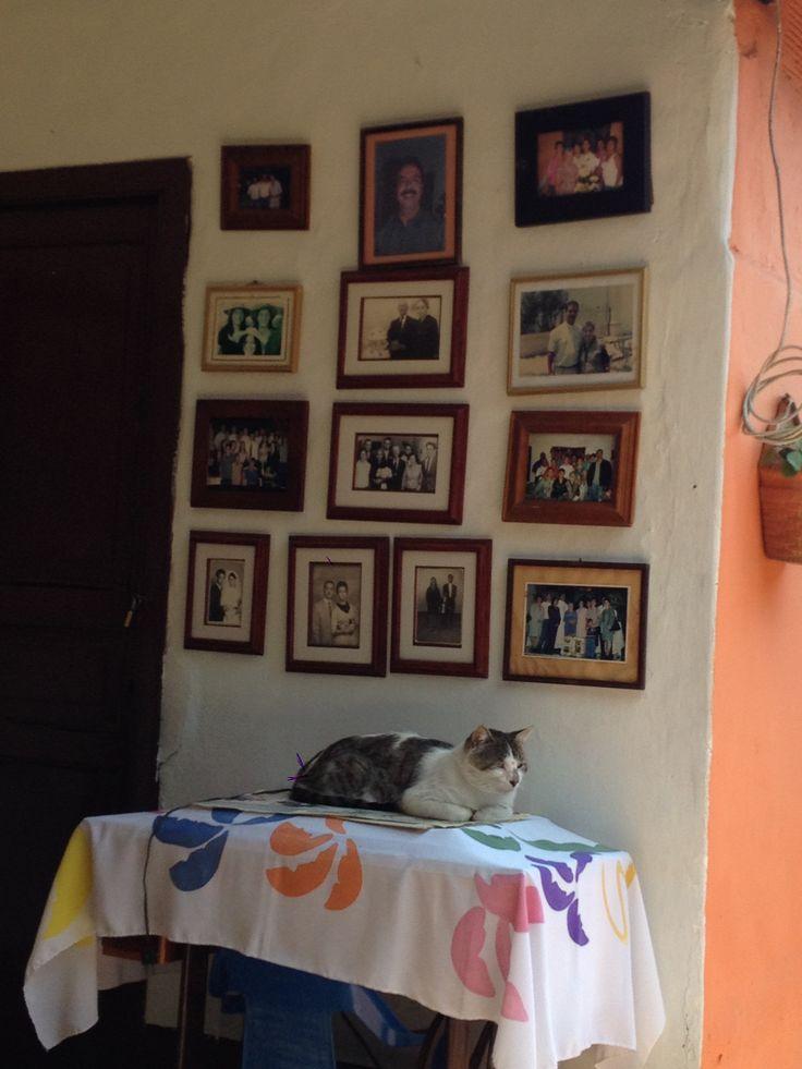 Pocholo echado en la mesa de la vieja máquina de coser de la abuela, en la pared algunas fotografías de hace algunos años