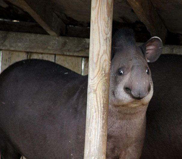Nem fotogén...   Fotó via boredpanda.com