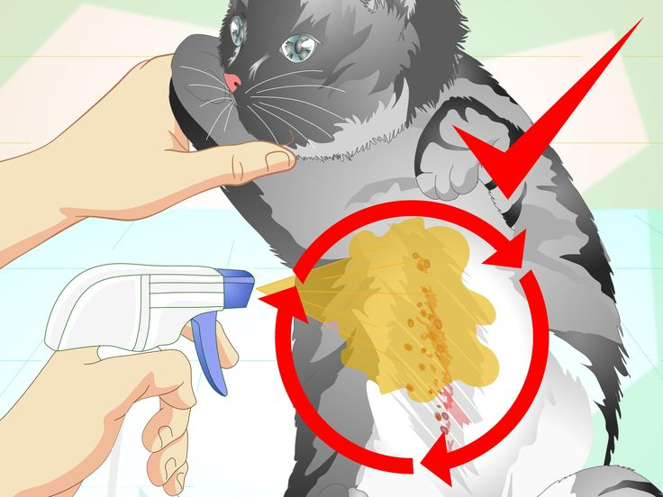how to kill fleas with your hands