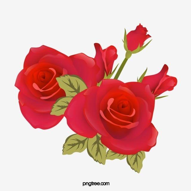 Bellas Rosas Rojas Imagenes Predisenadas De Rosa Roja Vector Png Rosa Png Y Psd Para Descargar Gratis Pngtree Rosas Rojas Rosas Rosa Roja