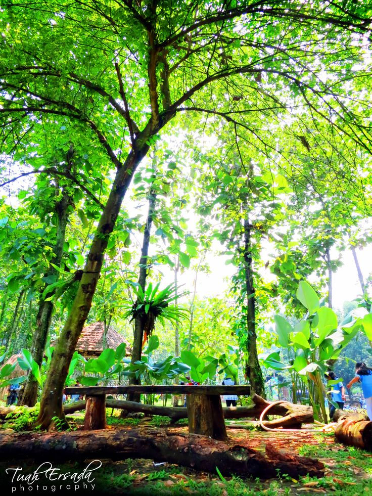 tree, jungle, forest, green, leaf, wood, seat, nature, tuah ersada, photography, grass, jakarta, indonesia,