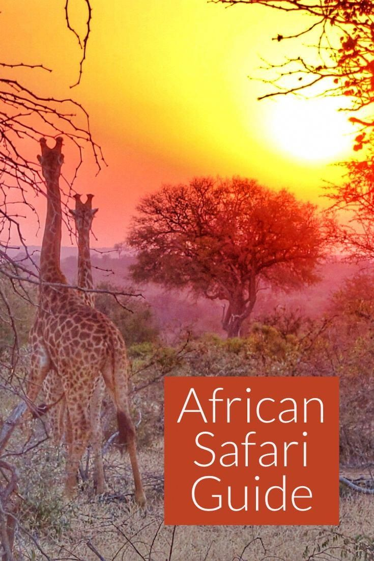 Best safari guides and trips in South Africa and Botswana