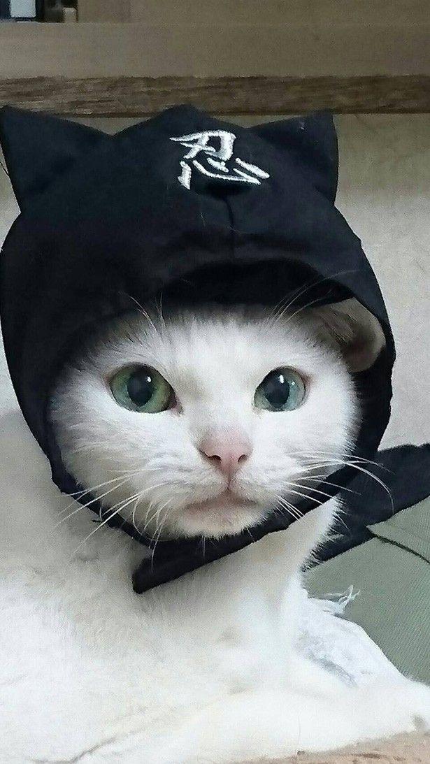 「猫忍」あなご&金時のキュートなショットを公開! - Yahoo! BEAUTY