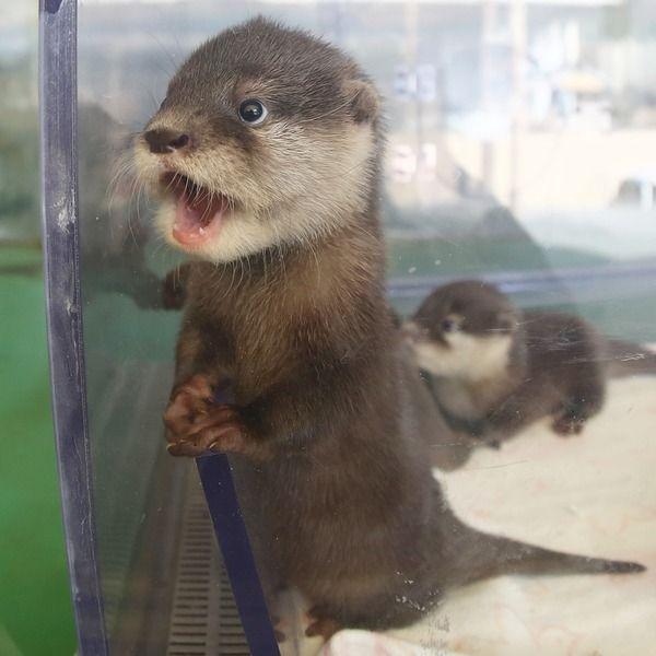 otter vending machine
