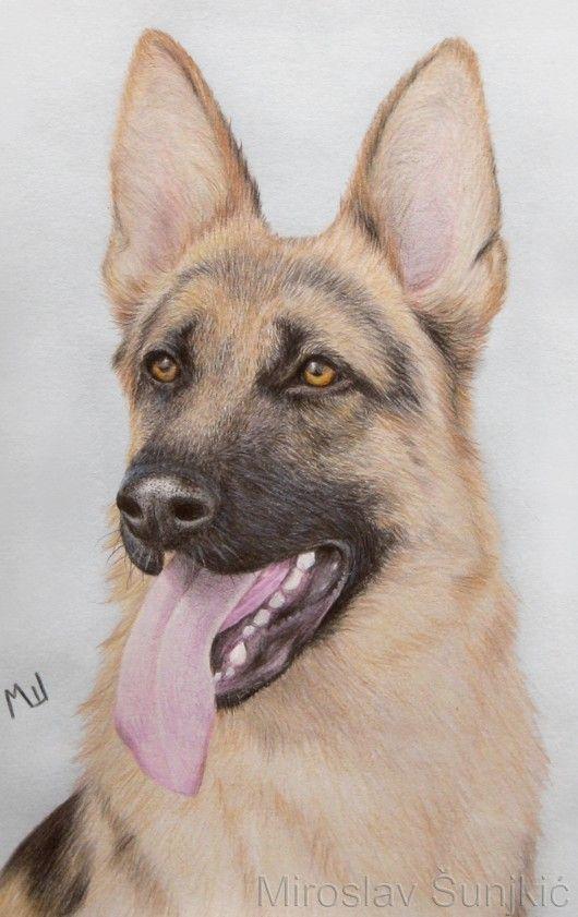 German Shepherd - Colored Pencil Drawing by Miroslav Sunjkic #dog #dogs…