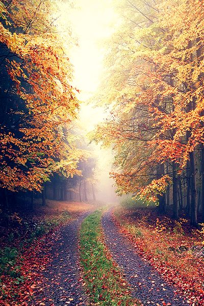 ♥ Autumn - Forest by d o l f i