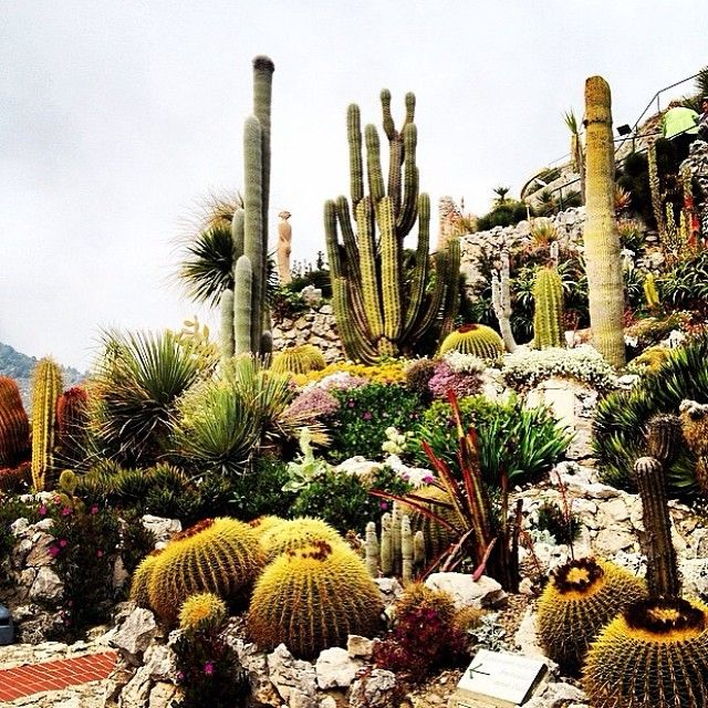 Cactus by @tarach09