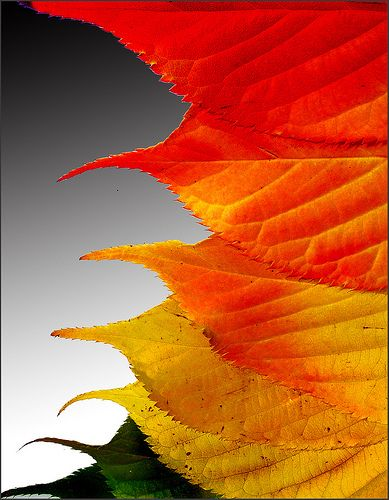 sometimes, we overthink with kids, intead all seaosn long we should catalogue the changing colours of the leaves, like this