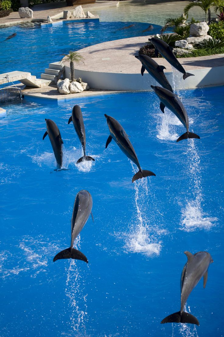 Who wants to swim with these beautiful dolphins? #dolphins #fun #mexico…