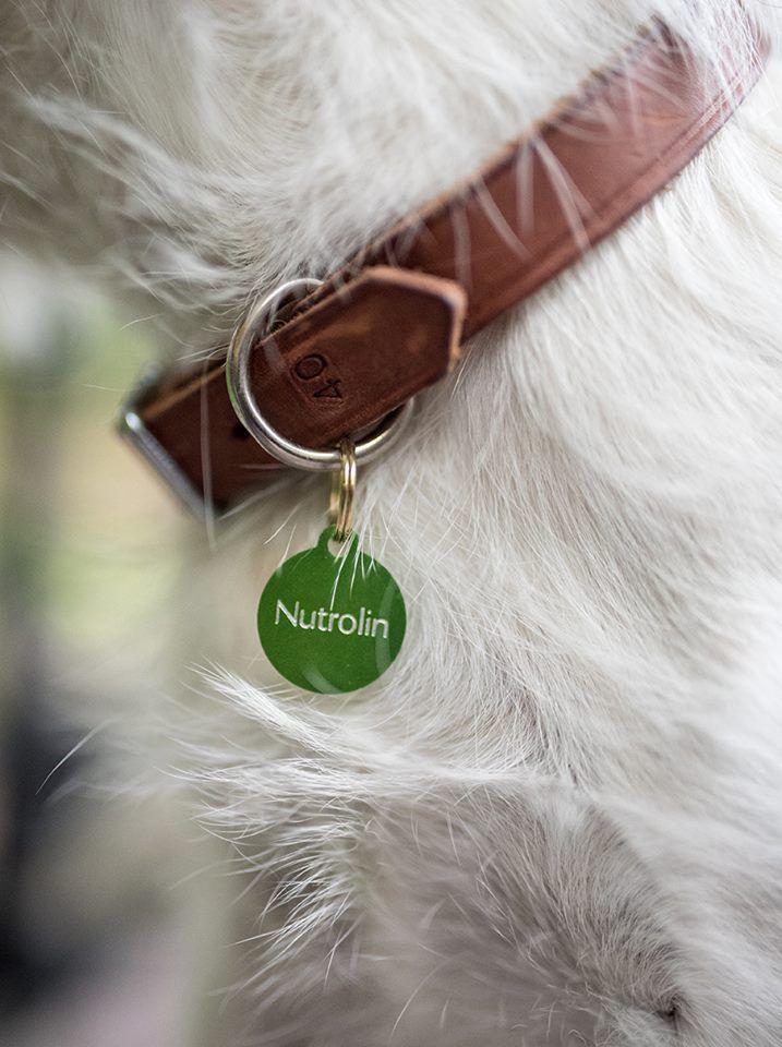 Har du träffat en Nutrolin-hund? ID-brickan är en del av valpens startpaket som medlemmarna i den svenska Nutrolin Uppfödarklubben får till sina valpar som ska flytta till nya hem. Är du en uppfödare, men inte än medlem i vår uppfödarklubb? Det är lätt att bli medlem: skicka dina kontaktuppgifter, din hemsideadress och ditt kennelnamn på adressen breeder@nutrolin.se.
