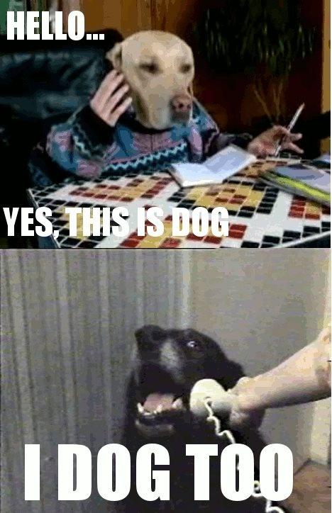 yes dog meme - photo #31