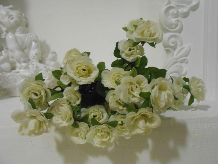 Роза шиповник белый