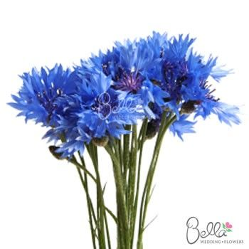 It Is Not Easy To Find Natural Blue Wedding Flowers But With The Cornflower You
