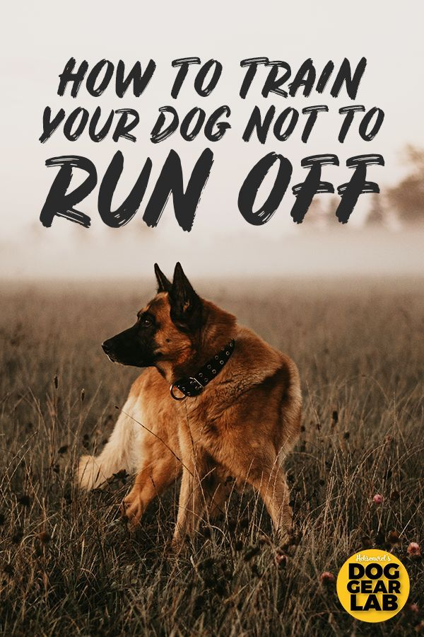 How To Train Your Dog Not To Run Off Training Your Dog Dog