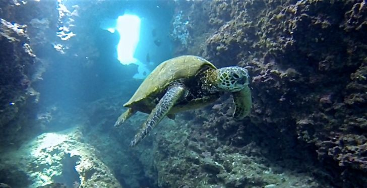 Scuba Diving With Sea Turtles In Hawaii
