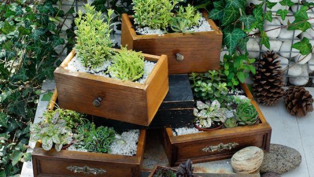 Květiny v zahradě: Tipy na super jednoduché dekorace