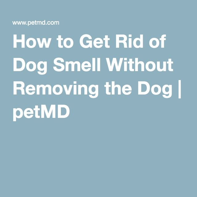 25 Best Ideas About Dog Smells On Pinterest Stinky Dog Dry Dog Shampoo And Diy Pet Shampoo Dogs