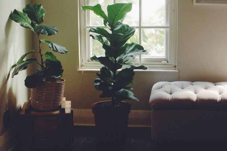 Care guide for indoor plants! By Bouwer Flowers.