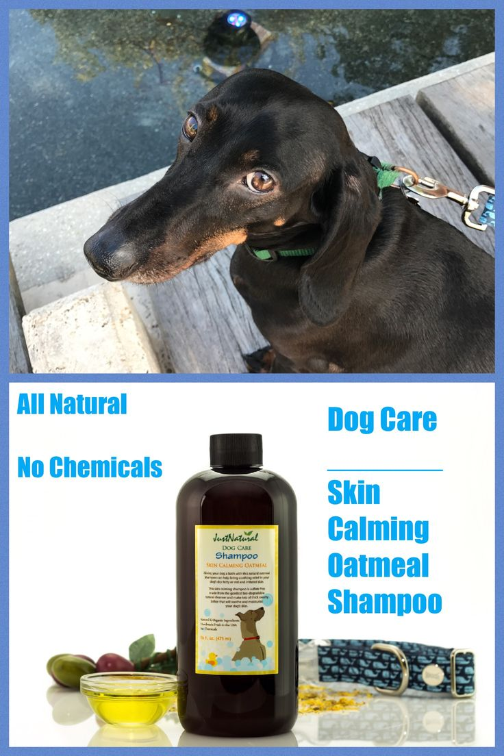 Giving your dog a bath with this nutritive oatmeal shampoo can help bring soothing relief to your dog's dry itchy or red and irritated skin.