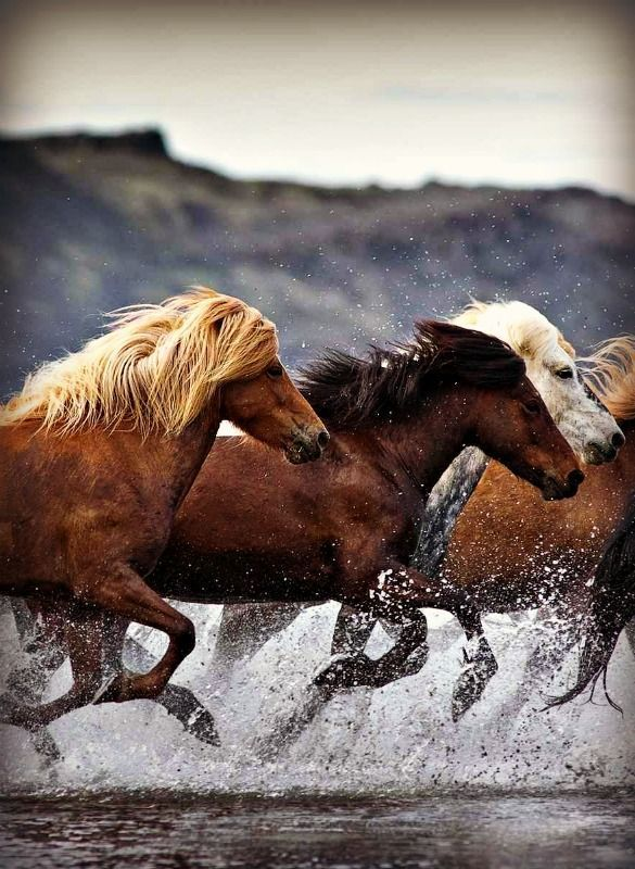 horses racing through the water