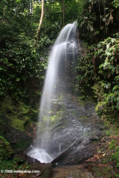 Jungle waterfall in Suriname
