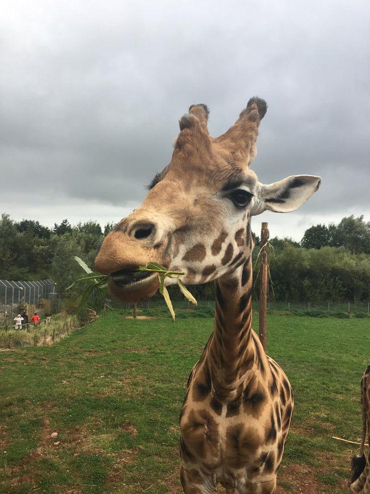 Girl Goes To South Lakes Safari Zoo