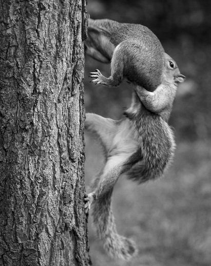 Whoa, stop right there, you acorn stealing thief.