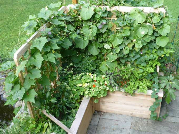 how to grow vegetables and herbs on autumn