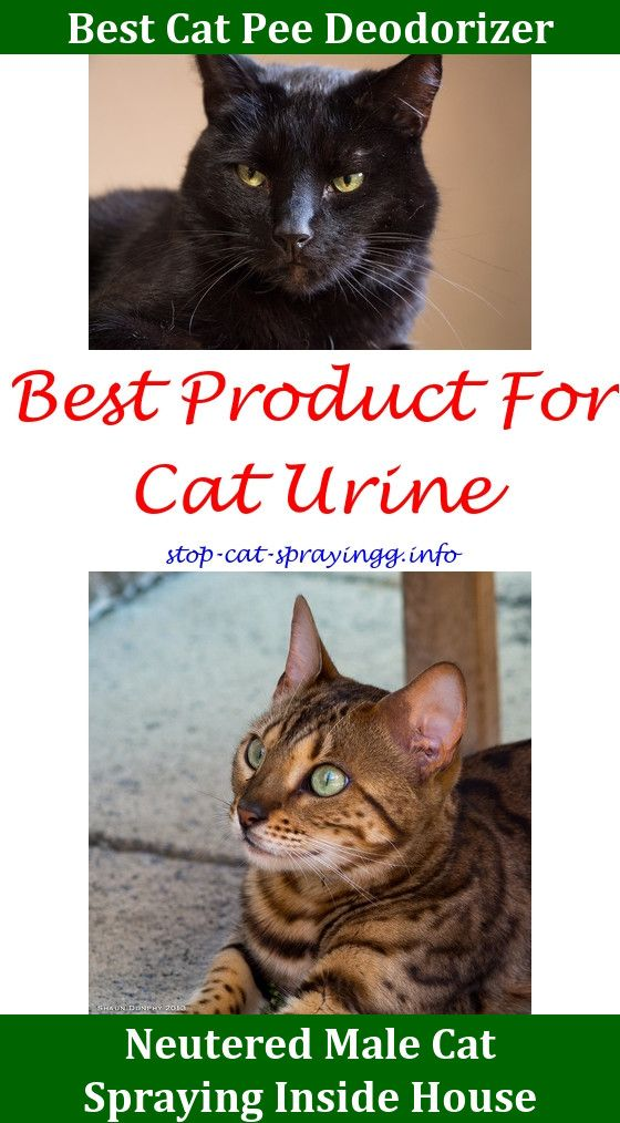 Female Cat Spraying Animals Male Cat Spraying Cats Cat