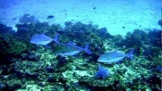 Diving and whale sharks - Similan Islands National Park  (worlds best)