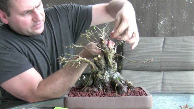How To Bonsai - Make a Bonsai Tree