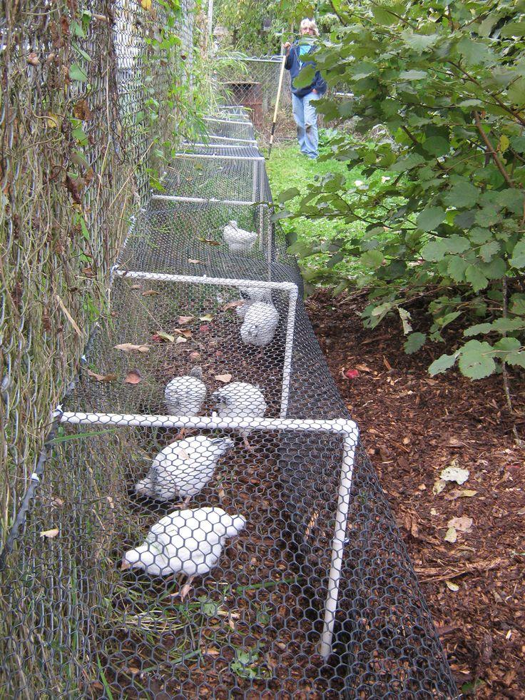 Noch eine tolle Hühnertunnel Idee um Auslauf zu haben und den Garten zu schützen