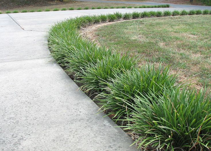 Love the monkey grass lined pathway monkey grass for Long grass landscaping