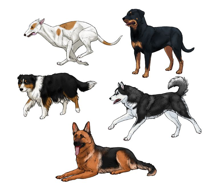 Drawing a dog is kind of like drawing a wolf — except for some important differences. Monika Zagrobelna shares her deep knowledge of drawing dogs & breeds.