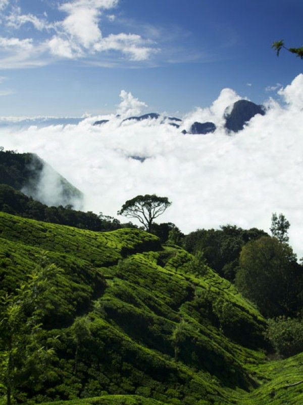 Darjeeling, West Bengal: Darjeeling is a lovely hill station which will make your honeymoon memorable. The acres of tea plantations and chilly weather will be the icing on your honeymoon cake!