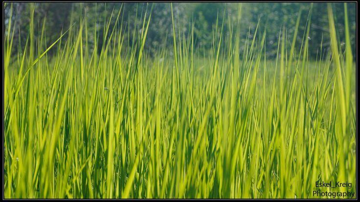 Sun grass by EskelKreig on DeviantArt