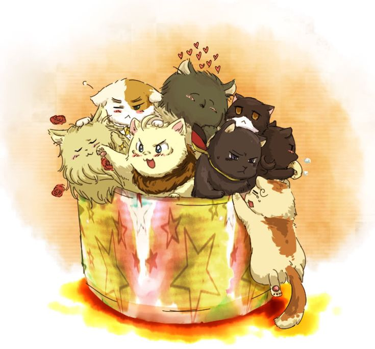 Cat X Dog Yaoi