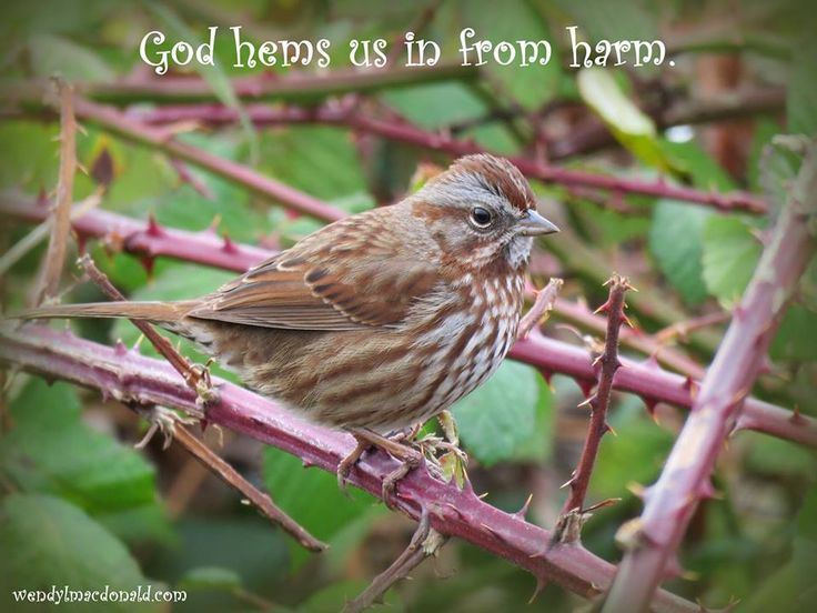 When worries whirl around in our minds May we give them to God instead Because strength is found in trusting Him To quiet the storms in our heads When worries fan the flames of fear May we cast them at Christ's feet Because He will hem us in with His hand And our enemies He'll defeat. ~ Wendy L. Macdonald     https://hopestreamradio.com/track/he-hems-us-in/