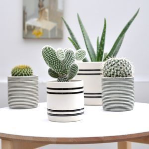 Faja Handcrafted Pot - use for mini Christmas trees on a festive table #cactusflowerpot