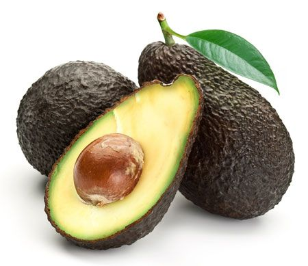 Hass Avocado Tree for Sale