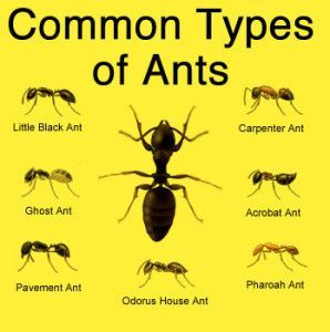 Image result for types of ants pictures