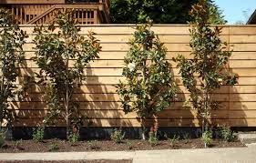 Image result for magnolia little gem landscaping