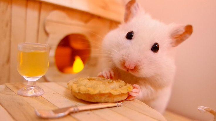 Hamster eating a pumpkin pie